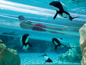 aquatica-slide