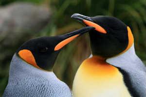 Orlando Science Center Penguins 3D
