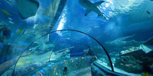 Sea Life Orlando tunnel
