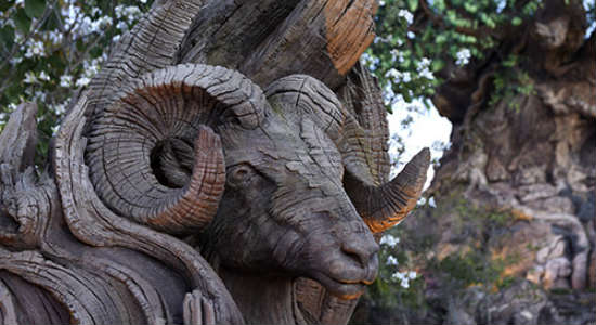 Disney's Animal Kingdom Shows New Tree of Life Carvings