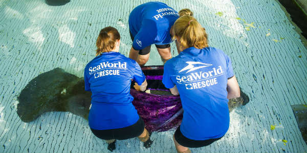 Image result for SeaWorld Orlando Rescue team