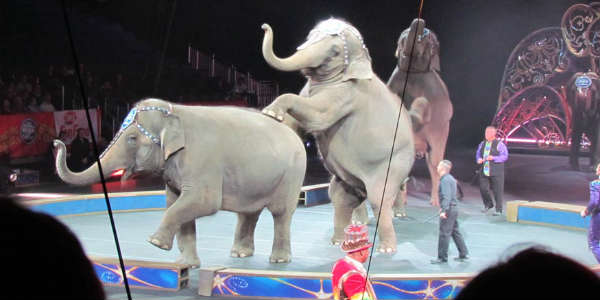 Ringling Bros. and Barnum and Bailey presents Legends -  photo by John Frost
