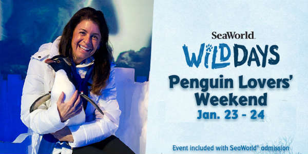 Penguin Lovers' Weekend with Julie Scardina at SeaWorld Orlando