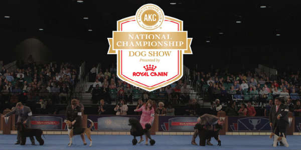 AKC Canine Extravaganza Brings Everything Dog to Orlando Dec 17-18, 2016