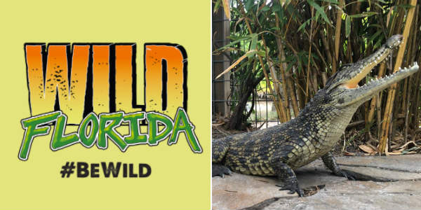 Wild Florida hosts Gator Week