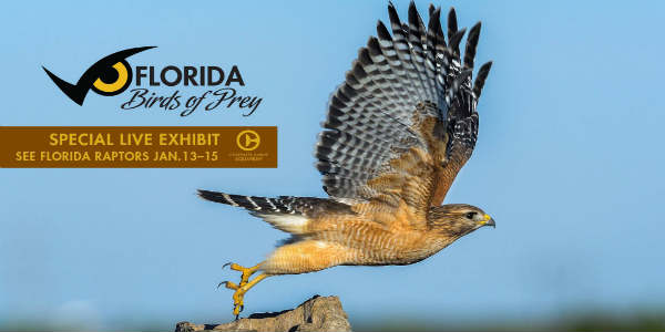 Clearwater Marine Aquarium Host Florida Birds of Prey Weekend Jan 13-15, 2018