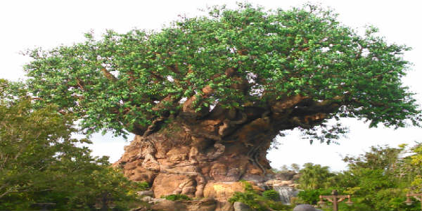 Disney's Animal Kingdom Kicks Off 20th Anniversary Celebration Starting April 22
