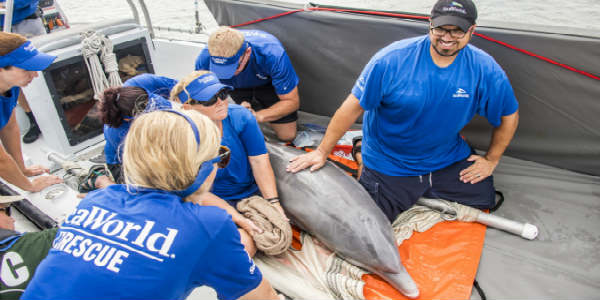 Members of the SeaWorld Orlando Rescue Team and the Georgia Aquarium Conservation Field Station, along with the Florida Fish and Wildlife Conservation Commission (FWC) have returned a rehabilitated dolphin back to the ocean.