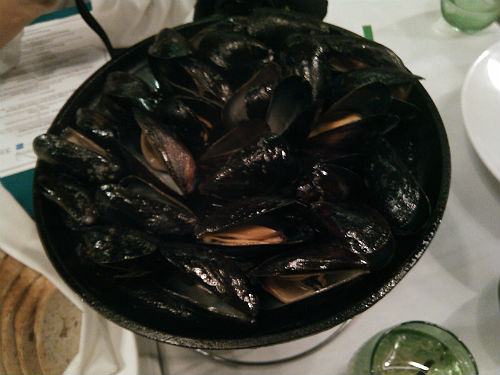 Urbain 40 - Northeast Atlantic Costal Mussels