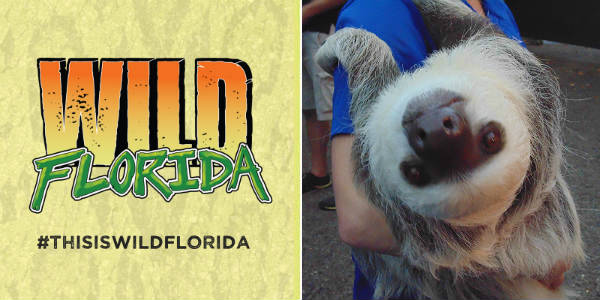Wild Florida is honoring a slow-moving, intensely adorable member of the animal kingdom with Sloth Week