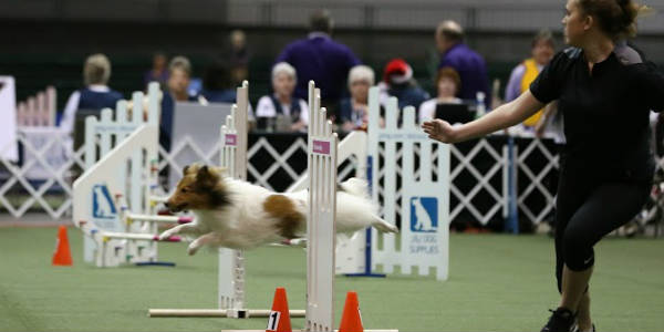 The AKC Royal Canin National All-Breed Puppy And Junior Stakes were held at the Orange Couny Convention Center this past weekend, and we have the list of winners.