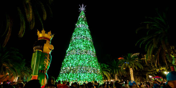 During the show, the Eola Wonderland Christmas Tree comes alive with synchronized light and music.
