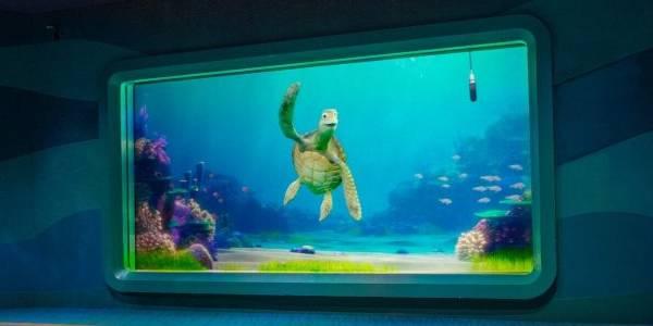 Turtle Talk with Crush at EPCOT at Walt Disney World